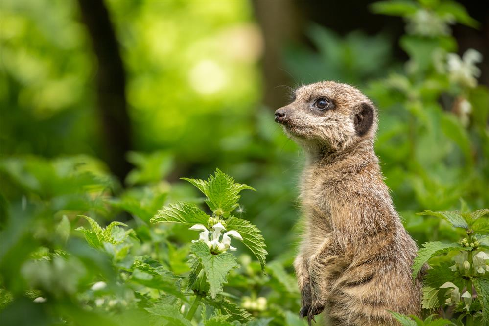 Featured course: Animal Encounters Experience
