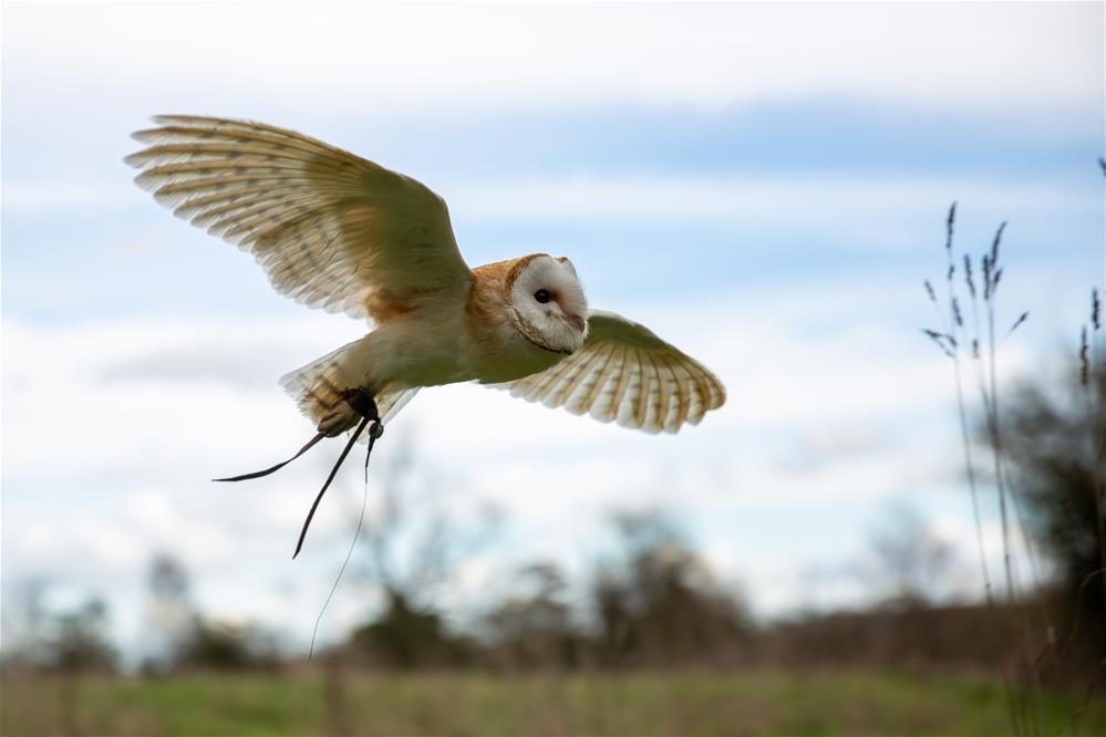 Featured course: Birds of Prey Experience