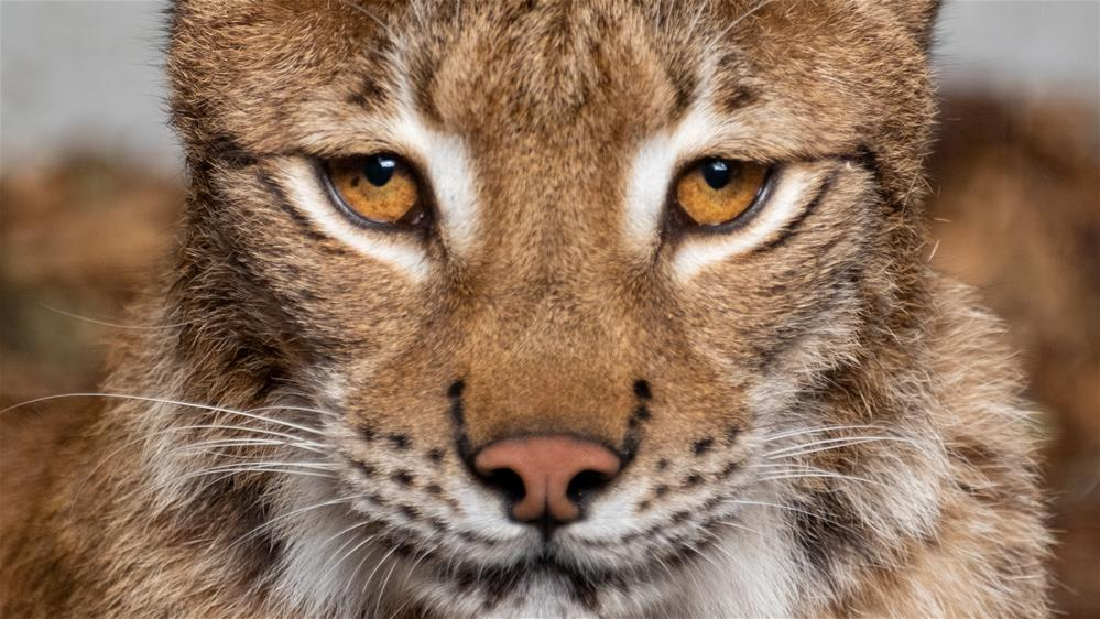 Featured course: Big Cats Experience