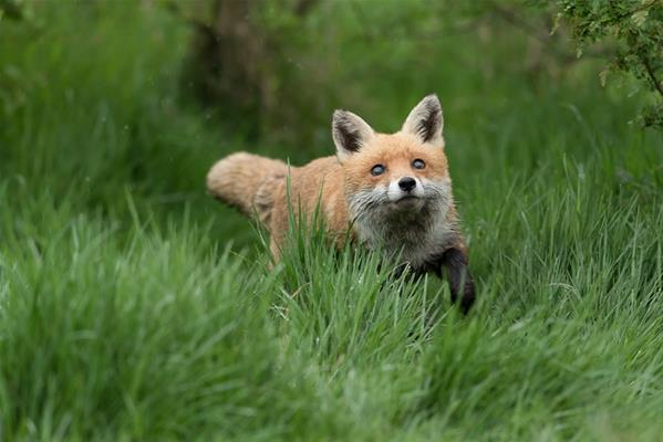 Featured course: British Wildlife Experience