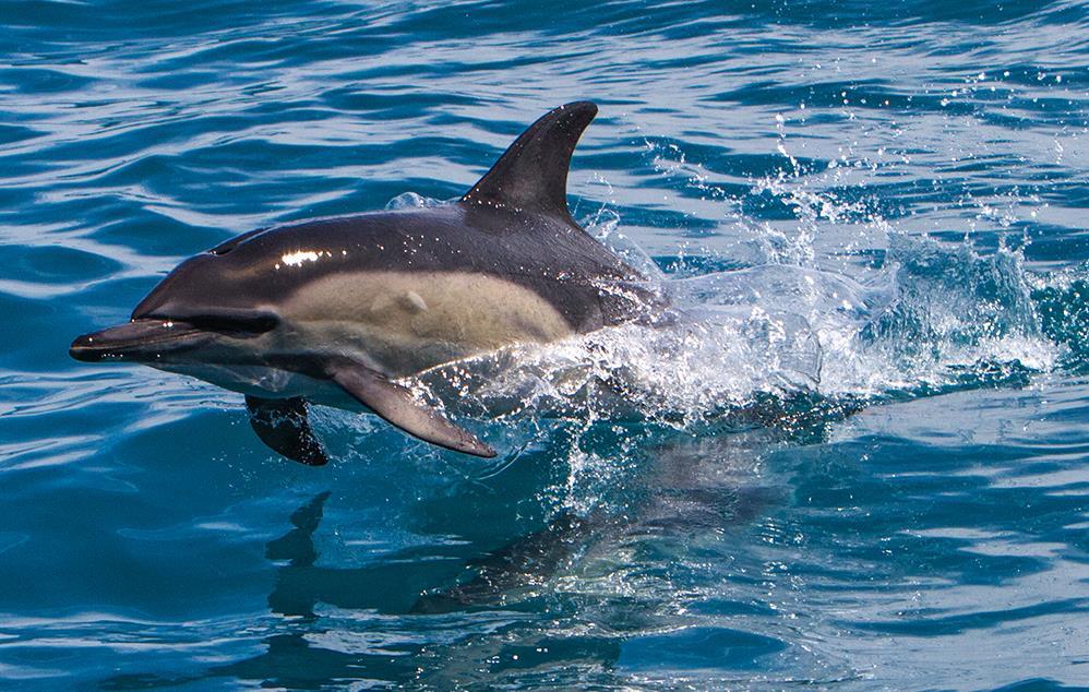 Featured course: ORCA Photographic Sea Safari
