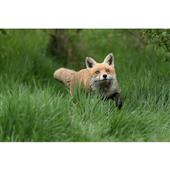 Jessops British Wildlife Experience