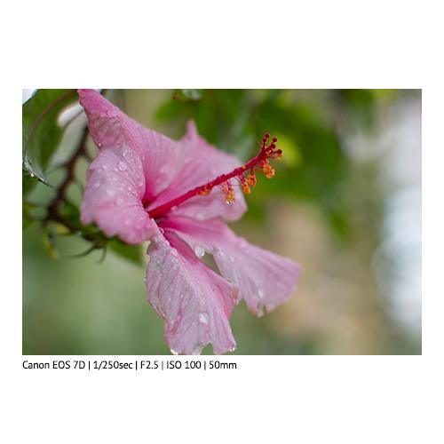 EF 50mm f1.2 L USM Lens Product Image (Secondary Image 3)