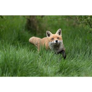 Buy Jessops British Wildlife Experience from Jessops