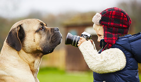 Pet photography